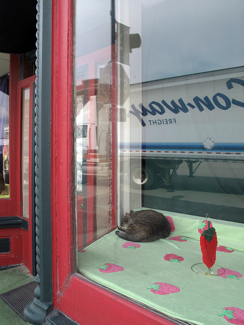 For the downtown of the city of Strawberry Point, Iowa: strawberries theme of storefront window; sleeping housecat.