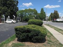 Streetside plantings.