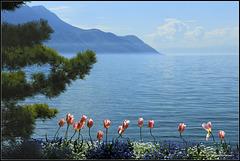 Fleurs de Montreux (SUISSE)