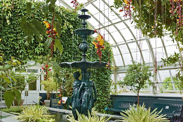 Aquatic Plants and Vines Gallery – New York Botanical Garden, New York, New York
