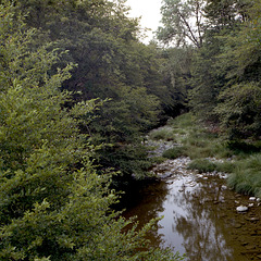 Maacama Creek