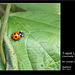 7 spot Ladybird Seaford 29 7 2011