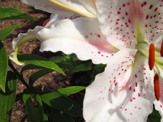 The curly petals