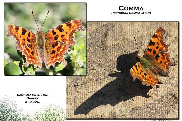 Comma E Blatchington 21 3 2012
