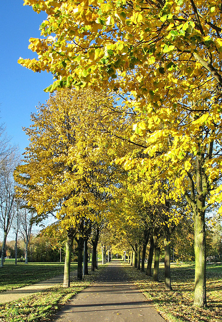 Trees On The Avenue