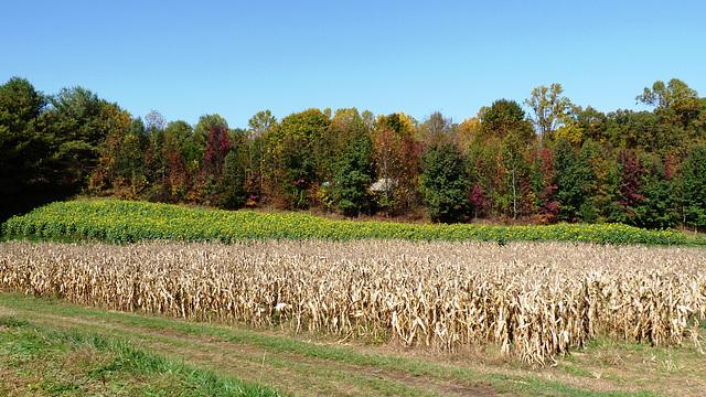 Queen Anne Farm