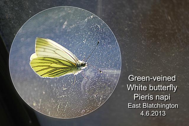Green-veined White EB 4 6 2013