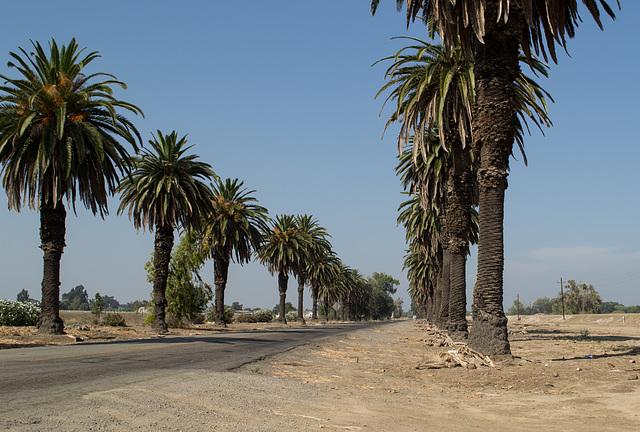Patterson Las Palmas (0587)