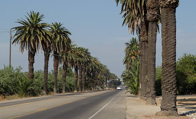 Patterson Las Palmas (0588)