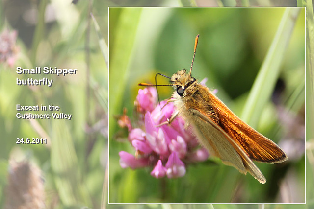 Small Skipper - Exceat - 24.6.2011