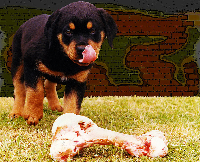 the bone and baby Rottweiler