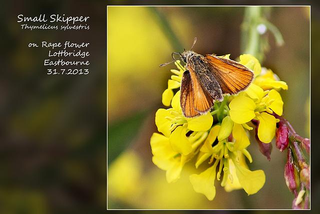 Small Skipper butterfly - Lottbridge - 31.7.2013