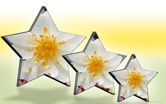 Blütensterne