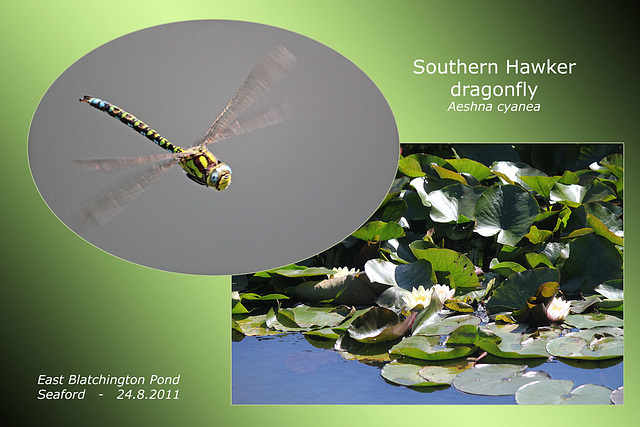 Southern Hawker dragonfly - East Blatchington Pond - 24.8.2011