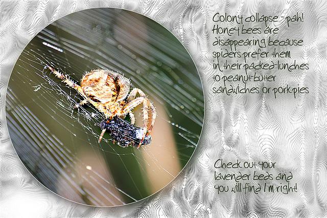 Spider & Honeybee sandwich 19 9 2011