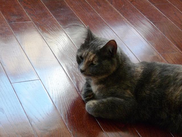 meditative cat