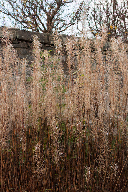 Plant life on the trinity railway line