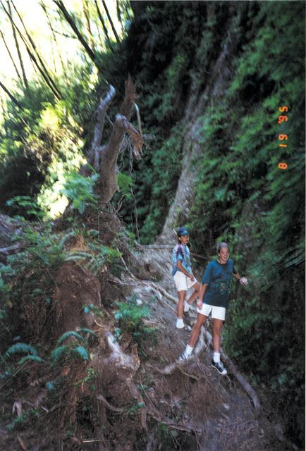 Fern Forest North of Arcata