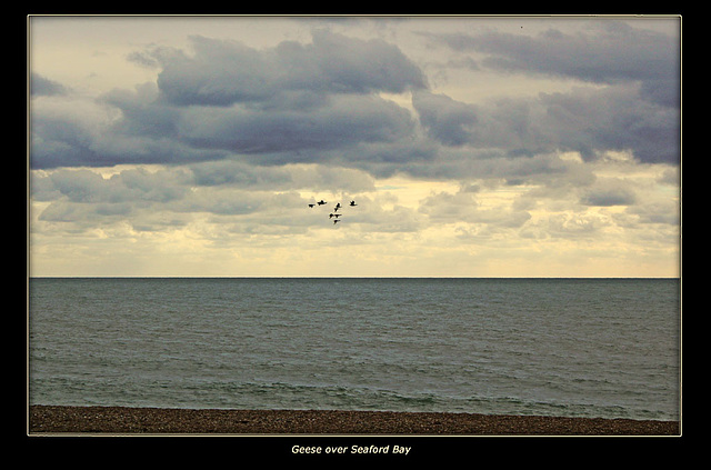 Geese over Seaford Bay 8 10 2011
