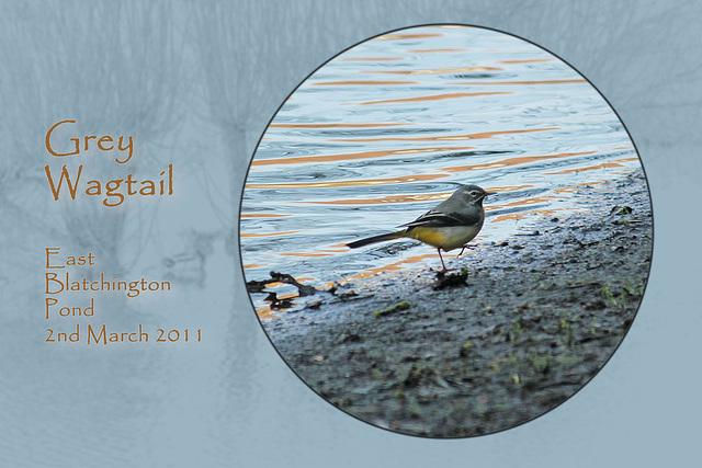 Grey Wagtail - East Blatchington Pond - 2.3.2011