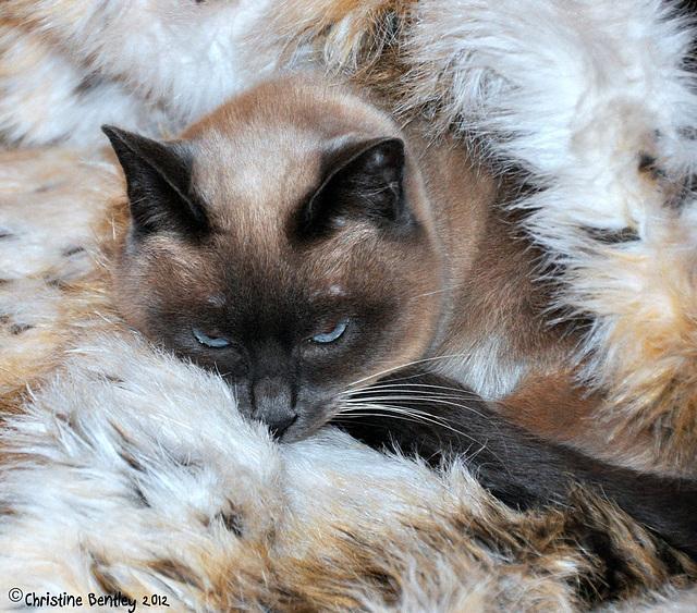 Snuggled In
