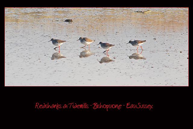 Redshanks - Tidemills - 25.11.2010