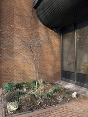 Are they approx the styles of architecture and landscaping, respectively, that you would have expected the Main Branch of the Philadelphia Senior Center to exhibit.