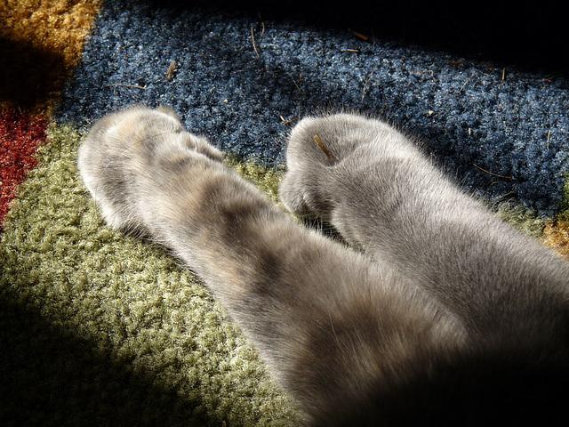 warm paws