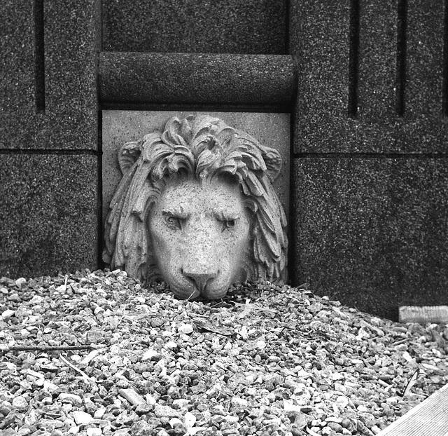 Thames Lion, Millbank.