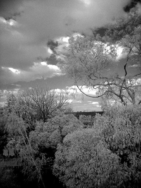 IR Backyard