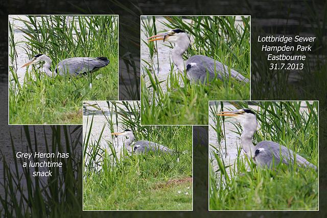 Grey Heron catches lunch - Lottbridge - 31.7.2013