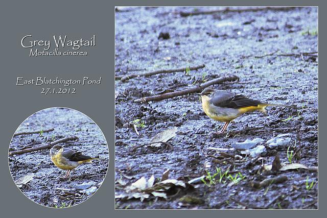 Grey Wagtail - East Blatchington Pond - 27.1.2012