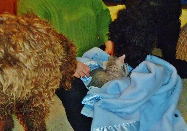 Fonzie & Coco checking out Kofta