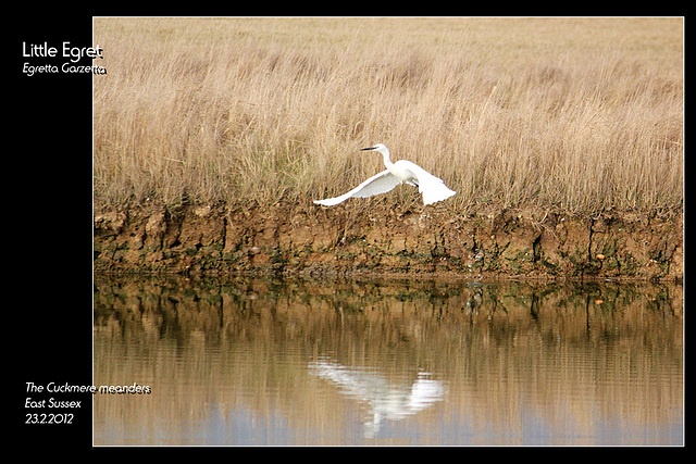 Little Egret 7 Sisters 23 2 2012