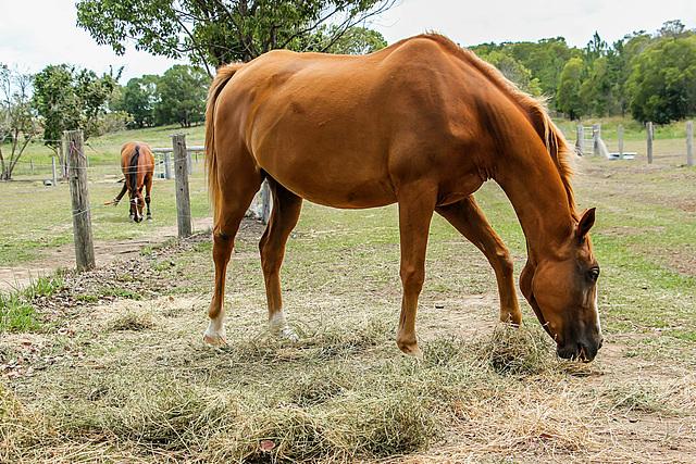 Horses at North Arm