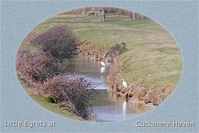 Little Egrets Cuckmere 11 3 2011