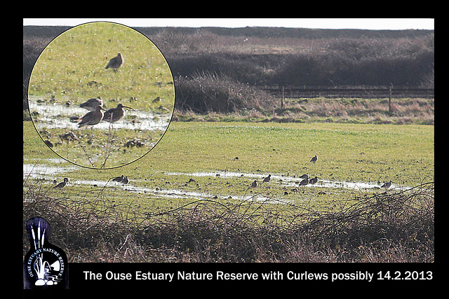 OENR with Curlews perhaps14 2 2013