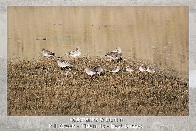 Redshanks & Dunlin Tidemills 11 2 2012