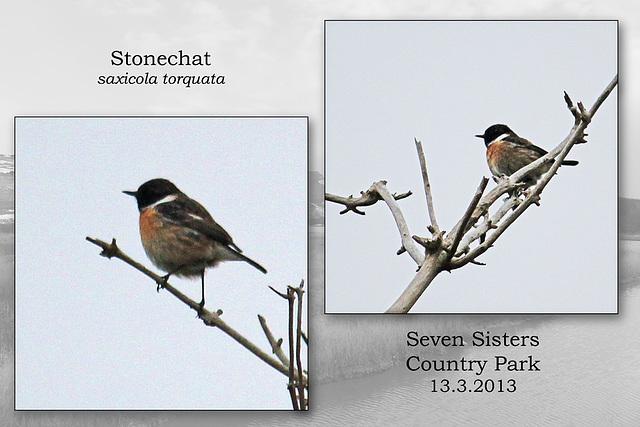 Stonechat Exceat 13 3 2013