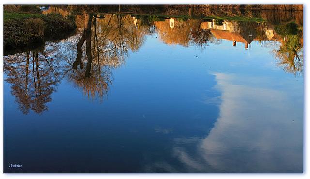 dans le bleu de l'étang