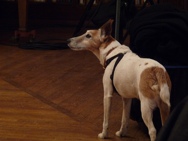 Charles Wright's dog