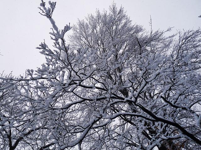 Dear Winter, please f off already