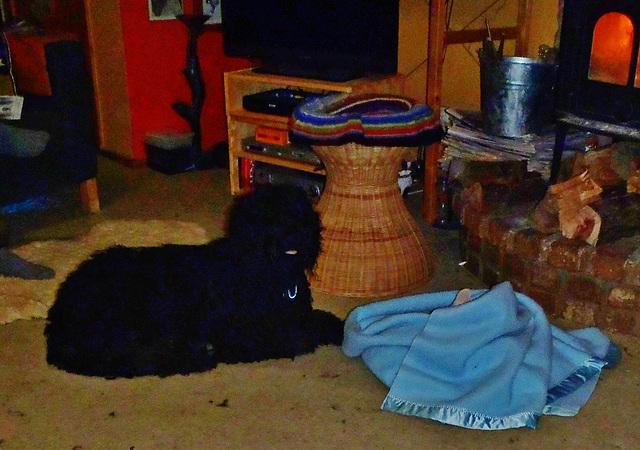 Fonzie guarding Kofta