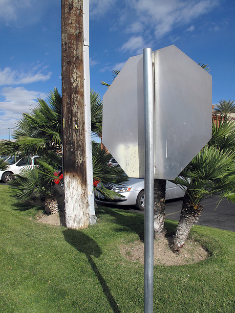 Give me a utility pole, a stop sign, a parking lot, some palms, and some mowed, and I'll torture them into arranging themselves into a super-super-fussy composition.