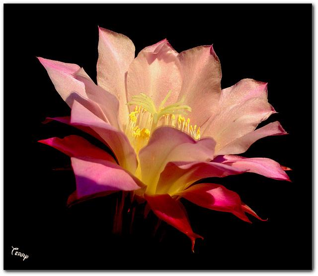 My Saturday Morning Bloom