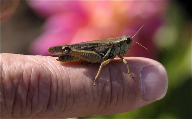 Grasshopper 00 20130805