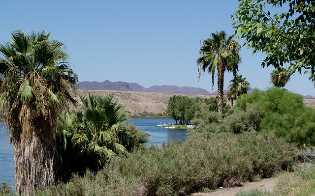 Parker, AZ: Colorado River (0677)