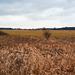 marschland-1180320-co-02-03-14