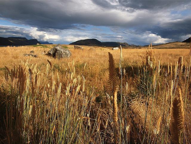 Grasslands near Kamloops, BC