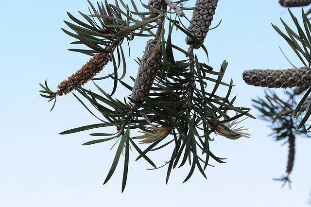 FREJUS: Port-Fréjus détail d'un arbre...